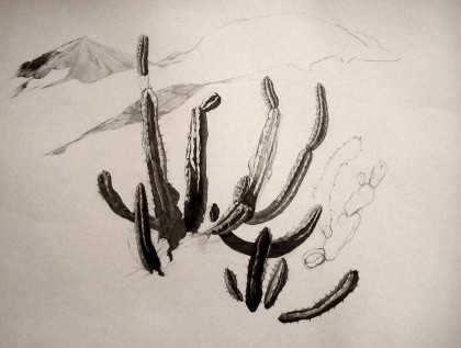 cactus_web